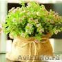Растения для вашего сада | Компания по продаже растений